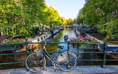Our Amsterdam expert, Rodney Bolt, offers a guide to visiting the city during the coming tulip-plucking season