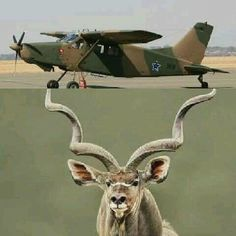 Union Of South Africa, South African Air Force, African Beads, Air Show, Military History, Horns, Aviation, Moose Art, War