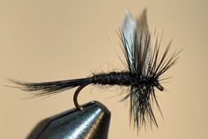Black Gnat - size 16 to 20
