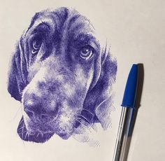 Puppy from with Bic pen on Canson paper. Biro Art, Ballpoint Pen Art, Ballpoint Pen Drawing, Art Drawings Sketches Simple, Animal Sketches, Animal Drawings, Ballpen Drawing, Hatch Drawing, Stylo Art