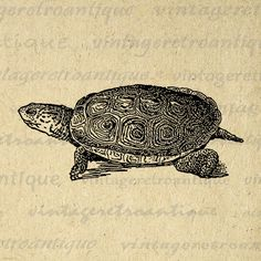 Terrapin Turtle Digital Graphic Printable Illustration Image