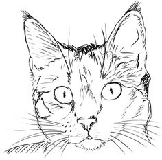 Drawing ideas animals cats ideas for 2019 Animal Sketches, Art Drawings Sketches, Easy Drawings, Animal Drawings, Drawings Of Cats, Animal Illustrations, Simple Cat Drawing, Cat Face Drawing, Realistic Cat Drawing