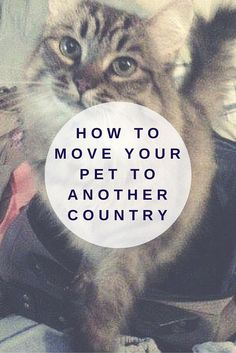 Tips for moving your furry friend to another country. #pet #travelwithpets #travel