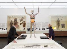 """Der """"Gläserne Mensch"""": Ein durchsichtiges Skelett, bei dem die Innereien sichtbar sind."""