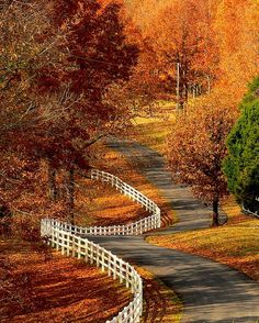 Winding road on an autumn day (Kentucky) by Alice Wilkman