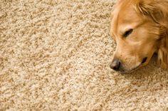 Zadbaj o to by Twój dywan był perfekcyjnie czysty powierzając go naszej firmie! Sprawdź sprawdzoną pralnie chemiczną, która wykona profesjonalne pranie dywanu