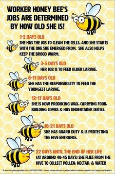 I Love Bees, Birds And The Bees, Honey Bee Facts, Buzzy Bee, Backyard Beekeeping, Bees And Wasps, Bee Friendly, Bee Art, Save The Bees