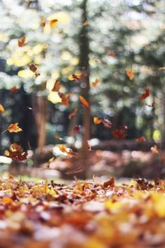 Fall Leaves in Motion Photo By Autumn Mott