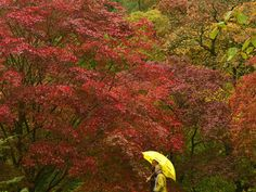 England - Fall foliage 2014 - Pictures - CBS News