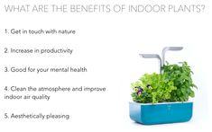 Smart Garden, Home And Garden, Benefits Of Indoor Plants, Vegetables For Babies, Aromatic Herbs, Edible Flowers, Indoor Air Quality, Health, Health Care