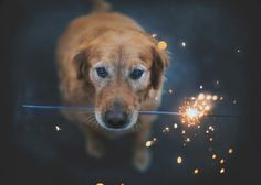 A dog and a firework