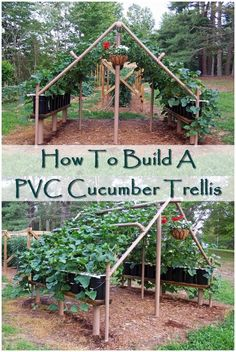 Expert Gardening Tips, Ideas and Projects that Every Gardener Should Know PVC cucumber trellis. This is definately going to be in my back yard:PVC cucumber trellis. This is definately going to be in my back yard: Garden Types, Veg Garden, Vegetable Garden Design, Garden Trellis, Edible Garden, Vertical Vegetable Gardens, Veggie Gardens, Vine Trellis, Trellis Ideas