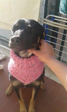 crochet cowl for dog
