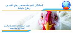 ما هي المشاكل التى تواجه مربى دجاج التسمين وطرق حلولها؟ | mazra3ty | مزرعتي