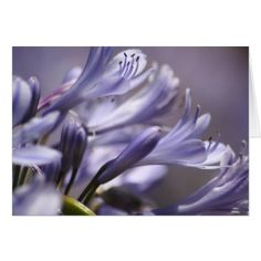 Purple Flowers Notecard - photography gifts diy custom unique special