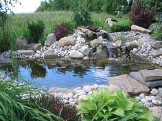 Teich Bepflanzen Hier Sind Noch Wunderbare Wasserpflanzen Für Teich
