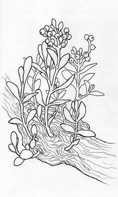 mistletoe coloring page mistletoe coloring page