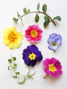 4 primrose and 1 viola Floral Flowers, Spring Flowers, Floral Wreath, Crafts To Do, Paper Crafts, Bloom Blossom, Primroses, Floral Photography, Illustration
