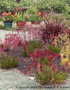Garden Tour - Water Friendly Garden