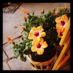 Cinque Terre 02 - Flores
