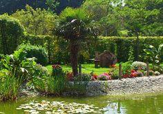 Apportez une note d'exotisme à votre extérieur en plantant des palmiers ! Suivez nos conseils sur inpirations.desjardins :http://inspirations.desjardins.fr/les-palmiers/