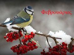 Image detail for -YouWall - Winter Bird Wallpaper - wallpaper,wallpapers,free wallpaper .