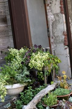 Small container garden houses an abundant collection of plants. Saipua