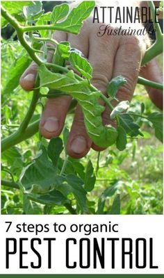 Organic gardening means using the least harmful method of controlling pests and diseases. This means a safer garden for your family and one that's not detrimental to the environment. Garden ~ prepping ~ homestead ~ grow your own ~ seeds ~ vegetables Garden Insects, Garden Pests, Herbs Garden, Garden Tips, Fruit Garden, Plant Pests, Tomato Garden, Garden Ideas, Organic Vegetables