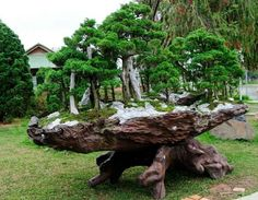 Forest sitting on carved tree root.