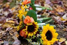 Fall sunflowers. Blue Toad Flowers.