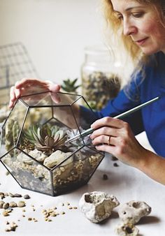 Terrariums are miniature gardens created under glass and they are making a comeback. Here we show you how to plant up your own terrarium with an easy step-by-step guide. Glass Terrarium Containers, Wall Terrarium, Terrarium Centerpiece, Succulent Centerpieces, Terrariums, Succulent Terrarium, Glass Terrarium Ideas, Closed Terrarium Plants, Succulents In Glass