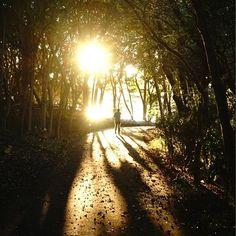 【mayuuu0264】さんのInstagramの写真をピンしています。《蝶の写真はまだまだあるのですが 一旦、お休みします。この前行った 大井埠頭なぎさの森公園で見た夕陽🌇 #夕陽 #夕暮れ時 #林 #公園  #大井埠頭なぎさの森公園  #sunset #tree #woods #forest #grove  #patk #nature #shadow #golden》