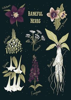 Baneful Herbs- Botany for witches Art Print by Katie Whittle - X-Small Botanical Drawings, Botanical Illustration, Botanical Prints, Witch Herbs, Pressed Flower Art, Witch Art, Witch Aesthetic, Poster Prints, Art Prints