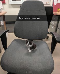 Office Worker - your daily dose of funny cats - cute kittens - pet memes - pets in clothes - kitty breeds - sweet animal pictures - perfect photos for cat moms Super Cute Animals, Cute Little Animals, Cute Funny Animals, Cute Cats, Funny Animal Jokes, Animal Memes, Funny Cats, Cute Animal Pictures, Cute Creatures