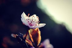 spring-it