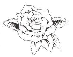 Rose Tattoos For Girls : Tattoo meaning Black Rose Tattoo For Men, Rose Tattoos For Girls, Tribal Rose Tattoos, Black Rose Tattoos, Rose Tattoo Stencil, Tattoo Outline Drawing, Flower Tattoo Drawings, Outline Drawings, Tattoo Roses