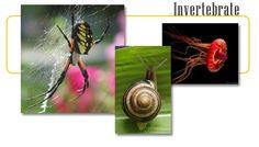 Invertebrates - info and online games