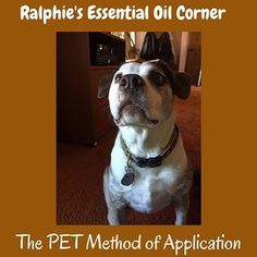 Greetings new Instagram friends. Yawn. Momma just gave me a PET Method treatment with some lavender after I chased after a cat in the yard and couldn't get over that it got away. Momma talks about the PET Method a lot in her Pets & Oils classes and that is normally how I get my essential oil fix. It is easy to do and is not messy. It can be done with Lavender, Peppermint, and Frankincense oils. Apply a drop of Pure Therapeutic Grade oil to one of your hands (if you are not comfortable with…