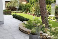 Zimozielony ogród przy białym domu - strona 234 - Forum ogrodnicze - Ogrodowisko