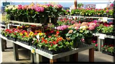 It's that time of year again. Come to our South Medford location and choose from a large verity of Flower.