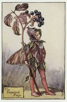 """1927 Matted Vintage Fairy Print from Cicely Mary Barker """"Book of the Flower Fairies"""" 1st Ed Dogwood Fairy Mystic Woods Folklore"""