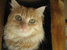 こにゃにゃちは #cat