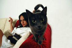 sexy girl cat