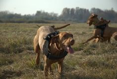 Dog Paths Can Tell A Lot About The Pack Pecking Order via @RedOrbit #dogs #dogbehavior