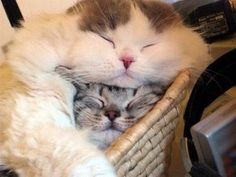 Cuddly cats.
