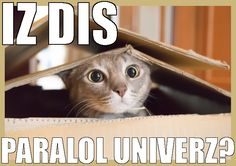 Cat found an LOL universe in the box