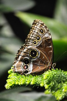 #Butterfly by agennari, via Flickr
