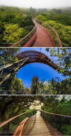Aerial Walkway in Cape Town Allows Visitors to Take a Surreal Stroll Above the Trees
