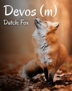 Cute Funny Animals, Cute Baby Animals, Nature Animals, Animals And Pets, Wild Animals, Fox Pictures, Foxes Photography, Pet Fox, Fox Art