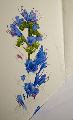 Blog about botanical painting and nature art. Watercolor paintings by Krzysztof Kowalski.